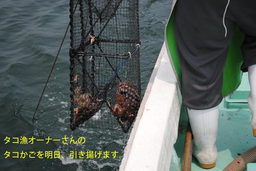 タコ漁オーナーさんのタコかごを明日、引き揚げます.jpg