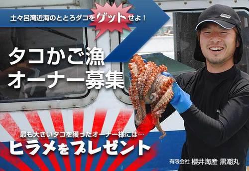 タコ漁オーナー制度.jpg