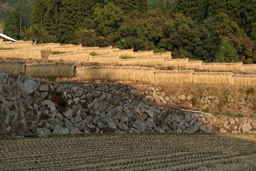 田んぼの石垣