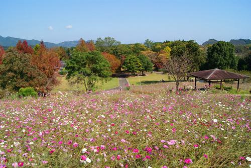 秋の延岡植物園
