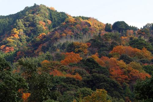 祝子川温泉付近の紅葉