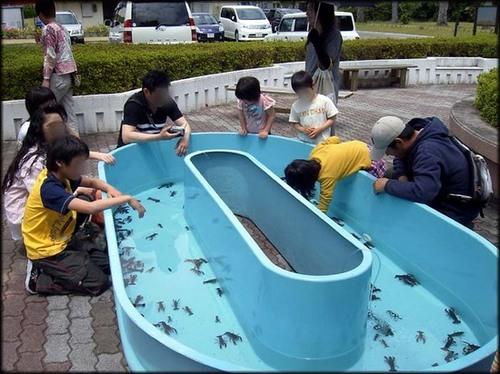 ザリガニ釣り大会.jpg