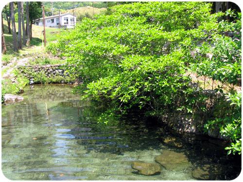 鯉がたくさんいる池