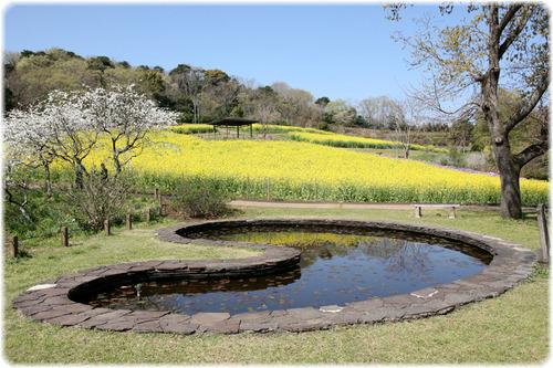 蓮の葉型の池