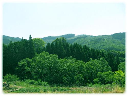 美々地の風景