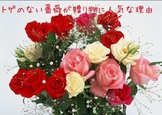 トゲのない薔薇が贈り物に人気の理由.jpg