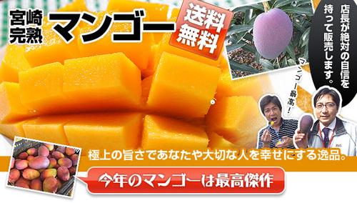 マンゴー販売.jpg
